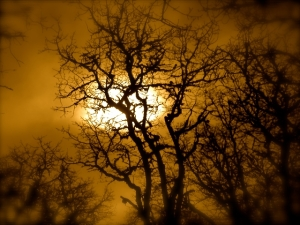 Love this edited image of tree in a cemetery....